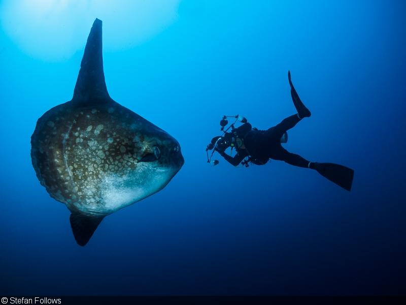 Bali Plongée Mola Mola