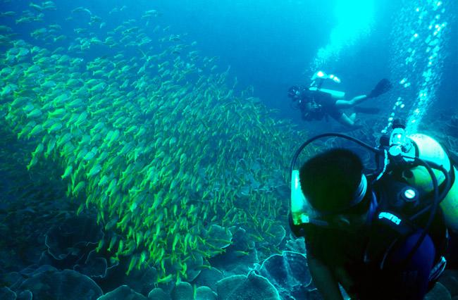 plongée snorkeling Activité Hotel El Nido Resort