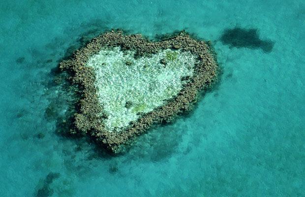 Heart reef - coeur de près