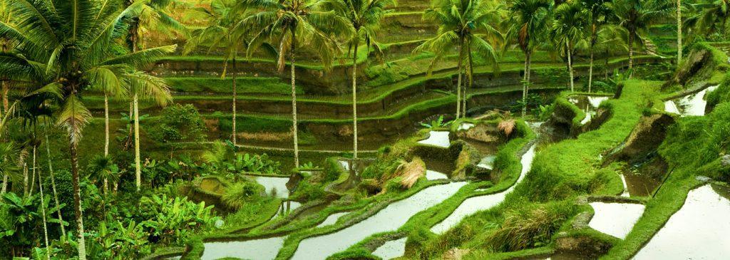 Bali Ubud rizières