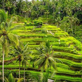 Bali rizières