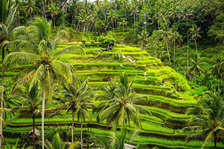 Bali, Une île Exotique à Découvrir Absolument