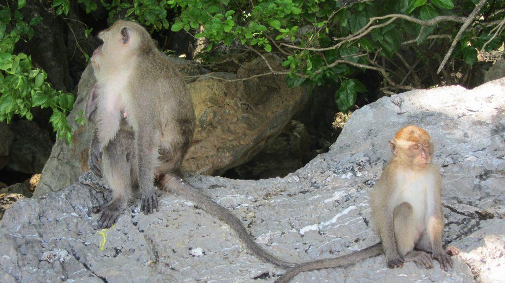 Koh Phi Phi Monkey Beach