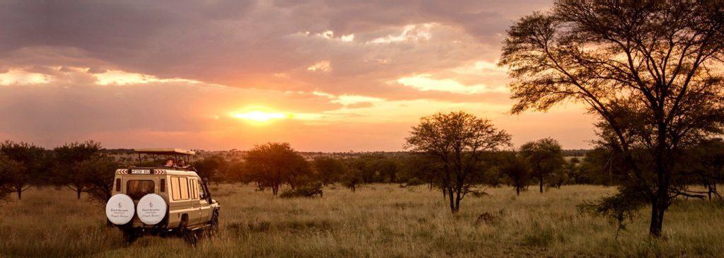 Voyage de Noces au Zanzibar - Safari en Tanzanie