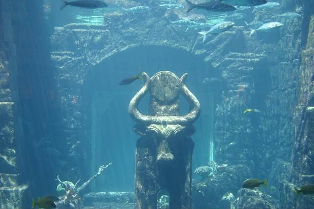 Voyage de Noces Bahamas - Plongée aux Biminis