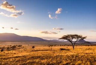 Voyage en Afrique : idées de séjours