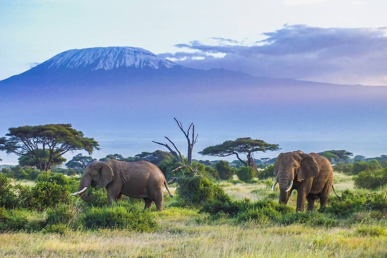 bien choisir son safari en Tanzanie