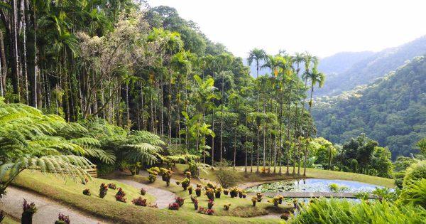 Vacances en Martinique : 4 solutions pour plus de liberté