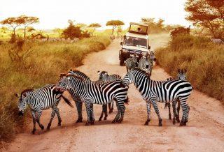 Comment bien choisir son safari en Tanzanie ?